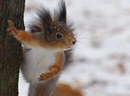 可爱机灵的松鼠高清大图