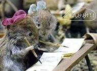 精选可爱呆萌的动物图片