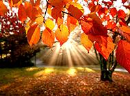 唯美浪漫的金黄秋天树林风景图片