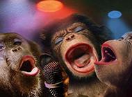最新恶搞动物PS图片