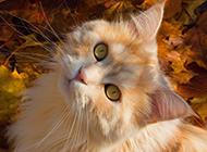 可爱的小黄猫唯美图片