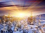 俄罗斯冬天森林浪漫雪景高清壁纸