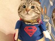 超人猫恶搞动物图片