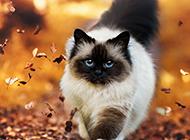 唯美秋天森林猫咪壁纸桌面