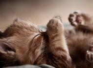 萌萌哒小猫睡觉的图片