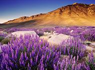 美国加利福尼亚风景高清摄影图片