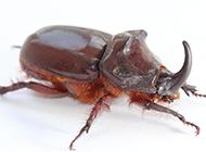 各种常见的昆虫图片大全