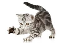 聪明的小猫动物高清图片