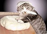 和面的猫大厨动物PS图片