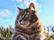 可爱的大猫高清写真图片