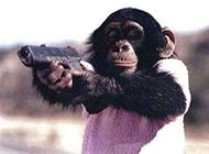 史上最霸气的动物图片