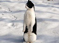 山寨版的企鹅搞笑图片