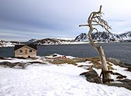 挪威纯白雪景风景图片