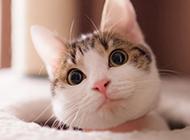 可爱小萌猫高清摄影图片