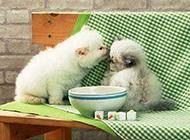 小猫咪动物囧图搞笑图片