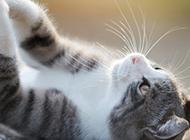 最萌的猫高清摄影图片