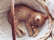 篮子里萌萌的小猫睡觉图片
