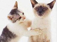 猫咪搞怪表情图片之别生气了