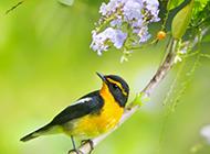 春天的鸟类动物摄影图片