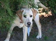 超霸气的狗狗图片之打劫