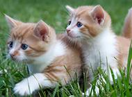 草坪上的超可爱小猫咪壁纸