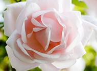 高清植物花卉风景图片大全