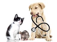 高清萌宠狗狗猫咪动物壁纸图片
