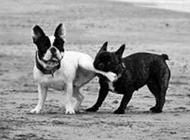 动物爆笑趣图之别咬我