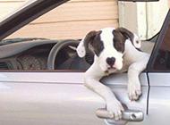 越狱的二货狗狗搞笑图片