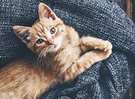 可爱小清新猫咪卖萌壁纸精选