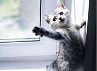 爆笑萌宠动物趣图之带我走
