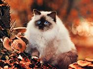 秋天森林可爱萌猫咪图片