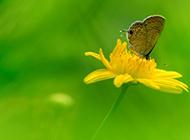 美丽的鲜花和蝴蝶图片