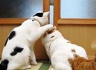 两只偷看的猫搞笑图片