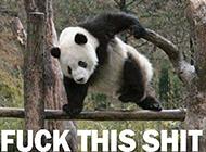 可爱二货动物趣图之功夫熊猫