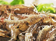 新鲜活的基围虾图片