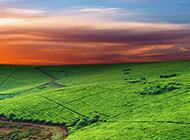 美丽绿色草原怡人风景壁纸图片