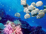 热带海底世界风景高清图片