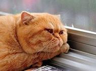 最多愁善感的猫动物图片