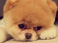萌萌哒的小狗狗高清图片