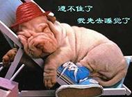 狗狗爆笑图片之我很困