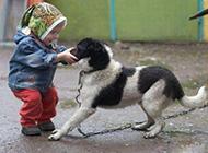儿童和狗狗的爆笑图片