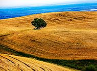 新疆平原秋天唯美风光图片