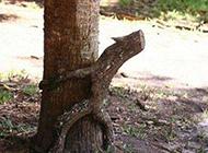 搞笑无节操的树干图片
