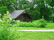 庭院的绿色风光图片欣赏