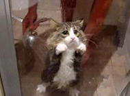 动物搞笑图片之我不要洗