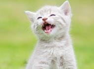 会笑的可爱小猫高清图片