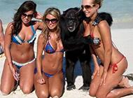 动物爆笑趣图之猩哥的福利