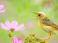 唯美春天花园小鸟图片
