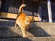 石阶上的猫咪壁纸超清图片